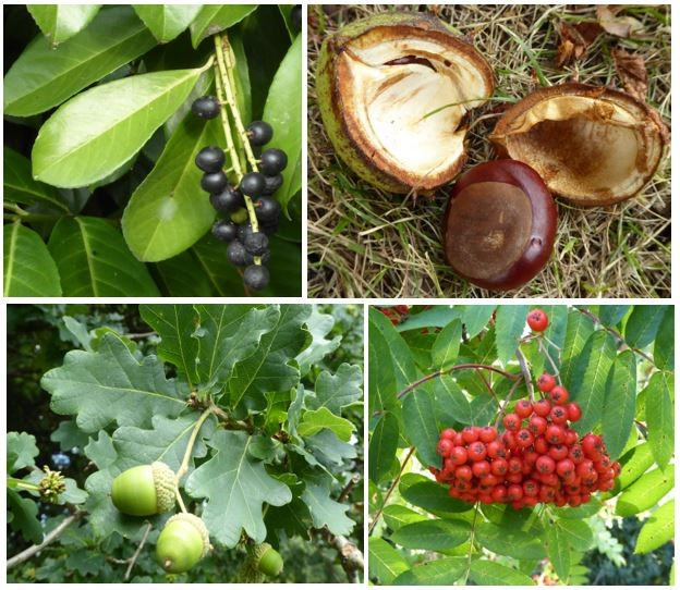 Potentially Risky Plants, Fungi and Fruit